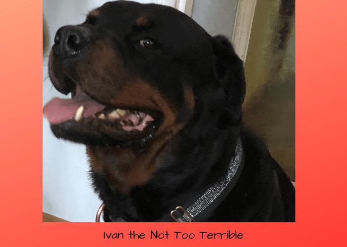 Ivan the Keto Dog