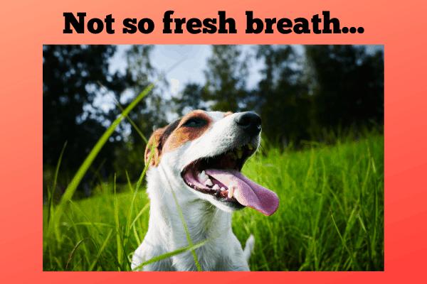 9 Signs of Ketosis - Dog Breath